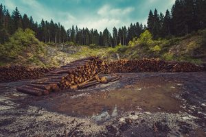Positive and negative impact of deforestation
