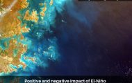 Positive and negative impact of El-Niño