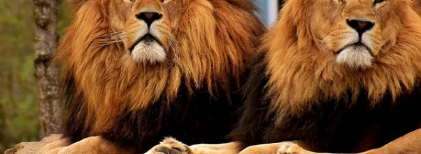 The positive and negative impacts of Zoos