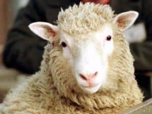 Dolly sheep was the first cloned animal in 1996