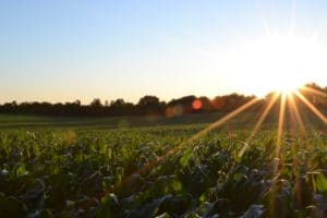 Pros and cons of farm subsidies